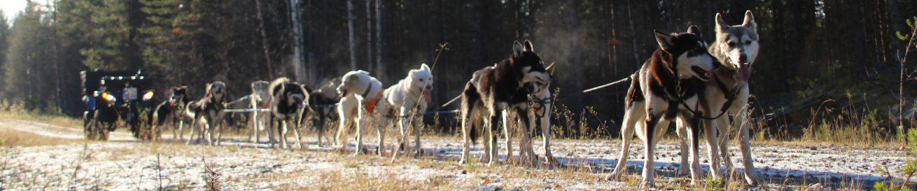 Laplands Wild Paws